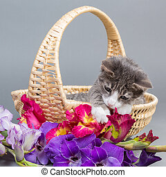 simply cozy - grey tiger kitten sitting in a beige basket...