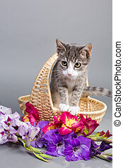 sweetes kittens - in the flower bas - grey tiger kitten...