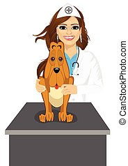 bloodhound sitting on table visiting veterinarian - portrait...