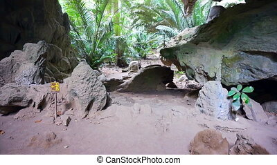 Tropical Jungle cave lush trees - Tropical Jungle cave and...