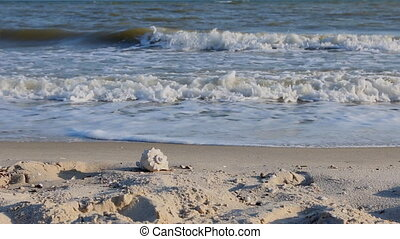 panorama sea shell on the beach among the waves at sunset HD...