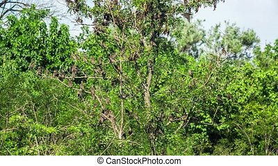School Of Sparrows Flying Around Branches Of Green Tree -...