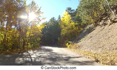 winding forest road, GoPro - the old road through the...
