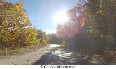 scenic route through forest, GoPro - Road through mixed...