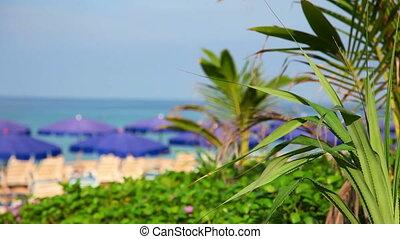 Tropical beach in Phuket, Thailand, rack focus