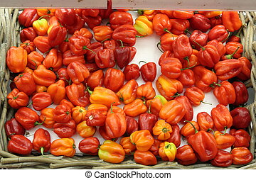 Scotch Bonnet Peppers - Colorful Hot Peppers