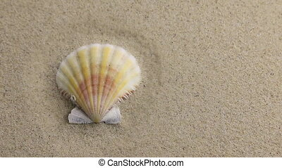 Wind blowing on the sand and opening yellow seashell , top...