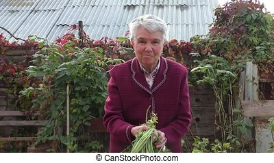 woman shows the grown up carrots - The elderly woman shows...
