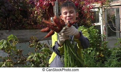 The boy shows a crop of carrots