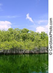 Florida Keys mangroove detail green water blue sky