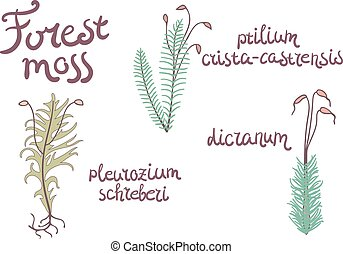 Forest moss set illustration. Isolated plants on white...