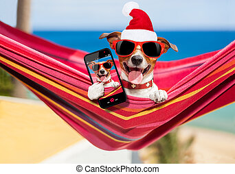 dog on hammock at christmas - dog relaxing on a fancy red...