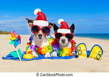 couple of dogs on christmas summer vacation - couple of two...