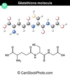 Glutathione chemical molecule - antioxidant and regulator...