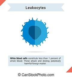 Flat icon leukocytes cell with its components for articles...