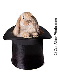 Bunny surprise - Little easter bunny as a surprise in a top...