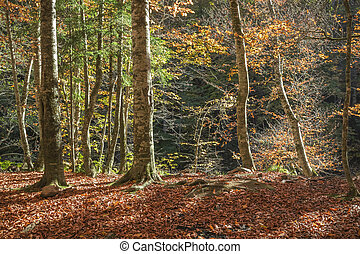 Sunny autumn day in the woods