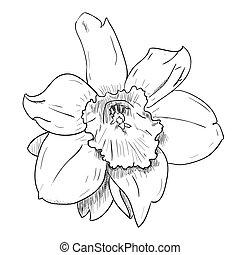 Vector sketch of flower