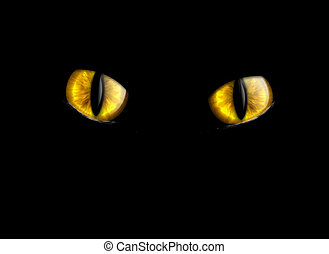 cat\'s eyes isolated on a black background