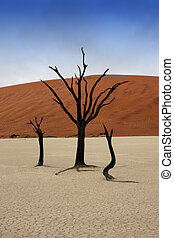 Solitaire - Dead trees in Deadvlei, desert of Namibia