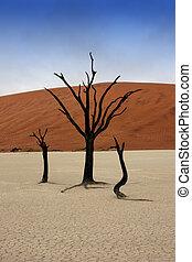 Solitaire - Dead trees in Deadvlei, desert of Namibia