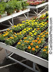 plantas, flores, colorido