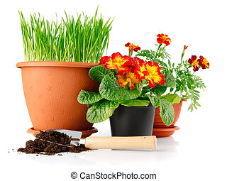 green grass in the pot with red flowers isolated