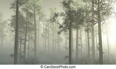 morning forest in fog