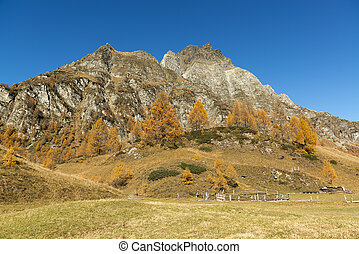 Autumn colors at the Devero Alp in a beautiful afternoon...