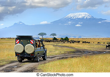 Safari game drive with the wildebeest, Masai mara reserve in...