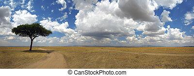 panorama, afrikas, baum