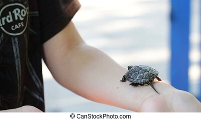 The little river turtle in the hand. - A girl holding a...