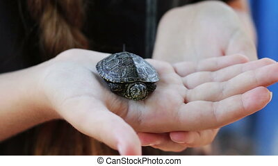 The little river turtle in the hand - A girl holding a small...