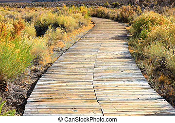 Board walk through plants near Mono lake