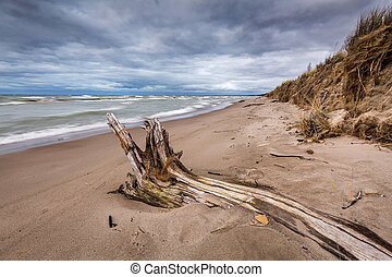 Driftwood on a Lake Huron Beach Under a Cloudy Sky - Autumn...