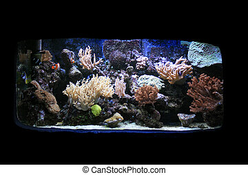 aquarium background - nice aquarium background with plants...