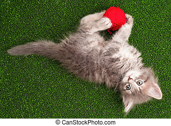 Kitten playing red clew of thread