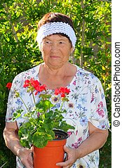 Senior woman tending to a hibiscus - A Senior woman tending...