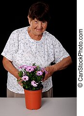 Senior woman tending to potted flower - A Senior woman...