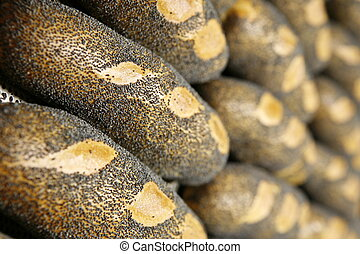poppyseed roll - bread, roll, bun, sunflower seed, diet,...