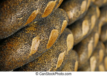 poppyseed roll - several poppyseed roll on grid