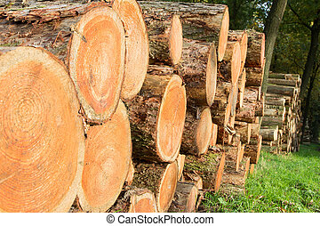 logs forest - Wooden Logs in a forest