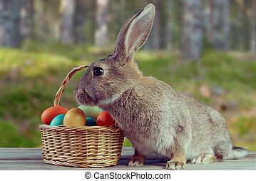 Easter bunny outdoor - Easter bunny with basket of colored...