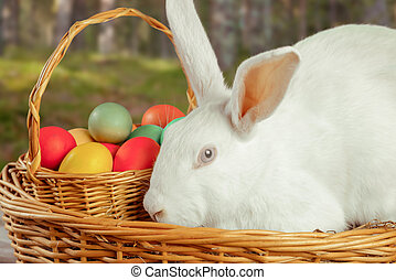 Cute white Ester rabbit - Beautiful white Easter rabbit in a...