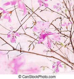 Cor-de-rosa, flor