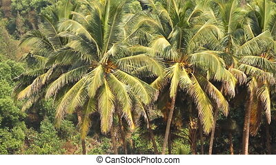 coconut palm trees in the tropical forest at summer day