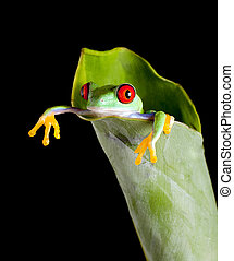 Frog in banana leaf