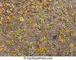 fallen leaves on the ground - fallen yellow and green leaves...