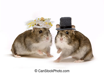 Hamster wedding - Two little hamsters wearing hats during...