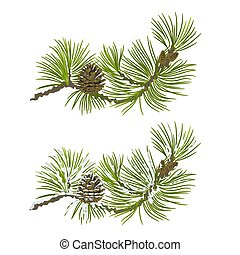 Pine branch with cone vector.eps - Pine branch with snow and...
